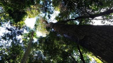Entenda como funciona a Compensação Ambiental no Brasil